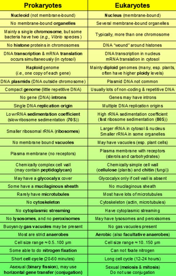 difference between prokaryotic and eukaryotic cells